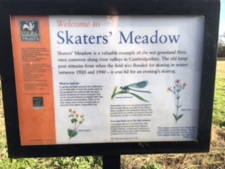 Skaters Meadow